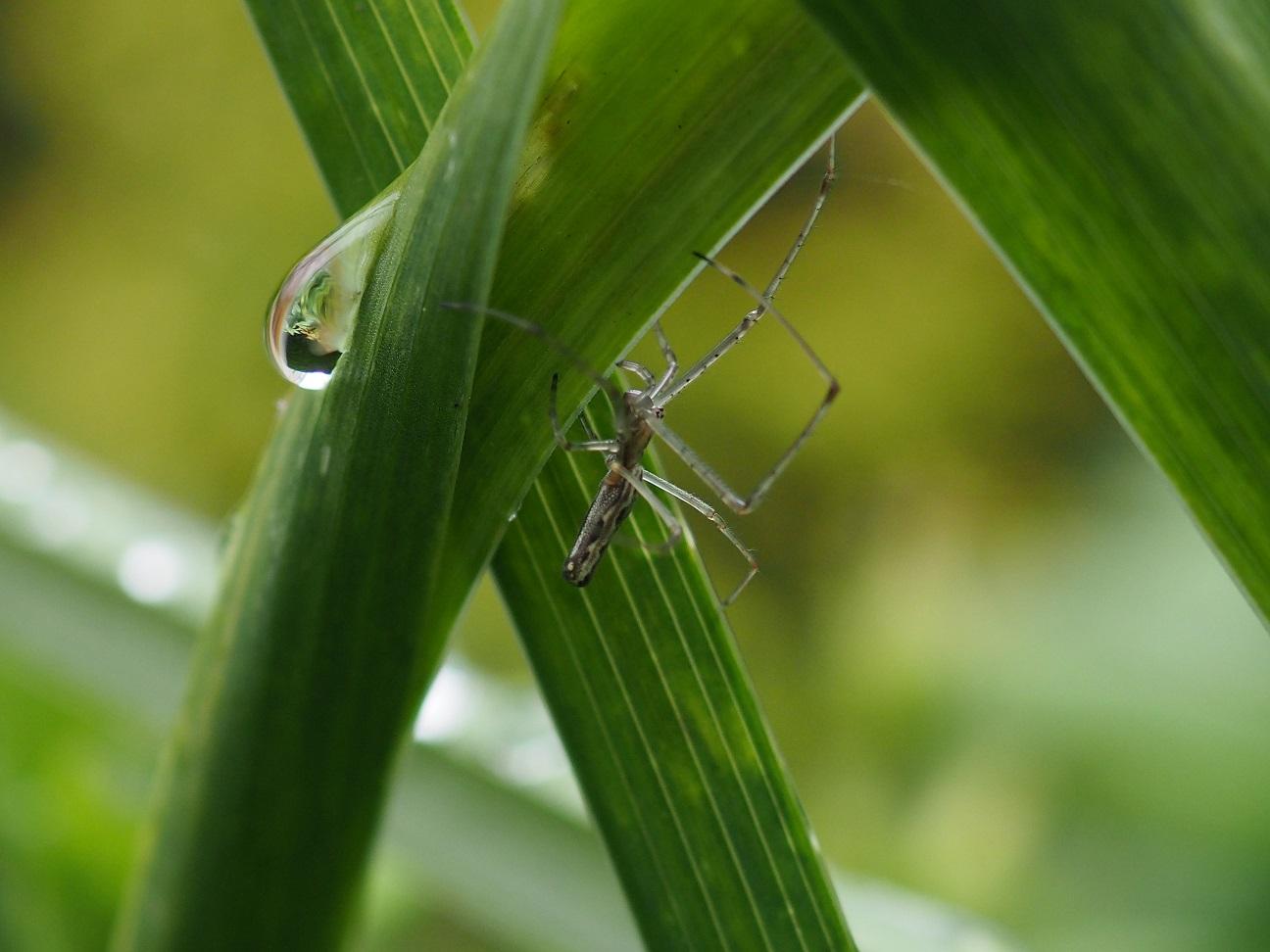 Spinnetje en waterdruppel (eigen foto)
