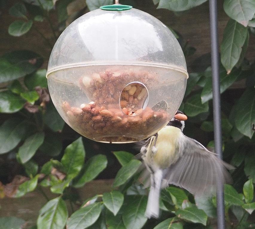 Voederbol voor kleine vogels. (eigen foto)