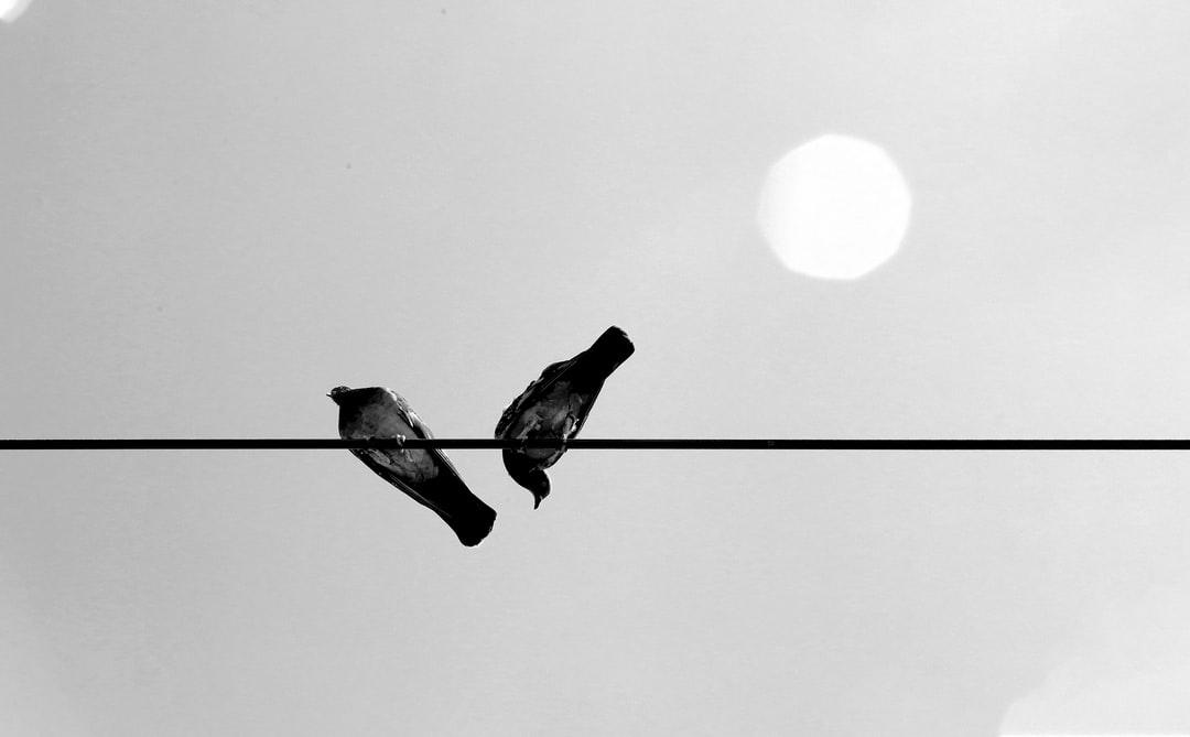Birds feeling alone, Bad communication